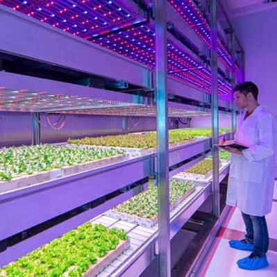 horticultural lights